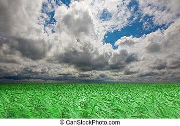 Green wheat field under an cloudy sky. High Quality XXL!