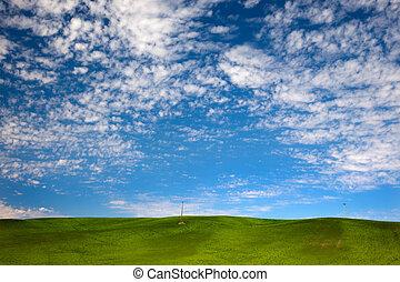 Green Wheat Grass Blue Skies Palouse Washington State