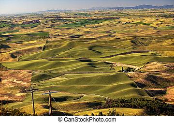 Green Wheat Grass Palouse Washington State