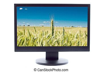 green wheat on farm field on TV sreen