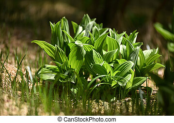 Green wild plant in the wilderness