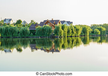 Green willows along the shore of the lake