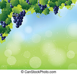 green wine and bunch of blue grapes on summer abstract blur...