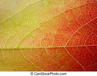 Background leaf in green, yellow and red, close-up
