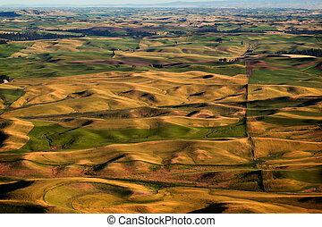 Green Yellow Wheat Grass Farms Palouse Washington State