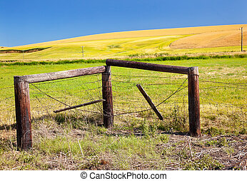 Green Yellow Wheat Grass Fields Fence Barbed Wire Blue Skies Palouse Washington State Pacific Northwest