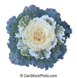 Ornamental Kale - Green, yellow, White Ornamental Kale ...