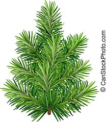 Green young Christmas tree