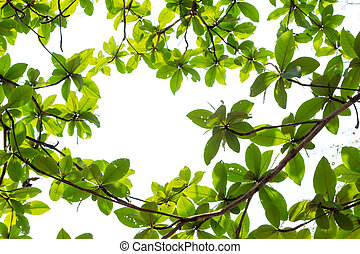 Green young leaves border on white background with copy space