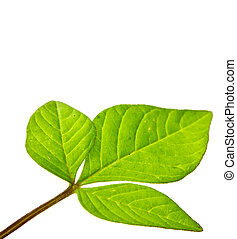 green young plant on white background
