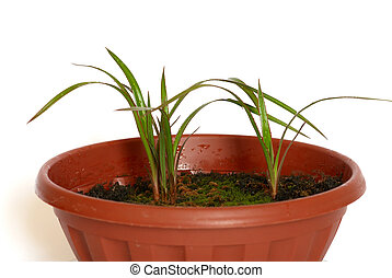 Green young plants in the pot on white background.