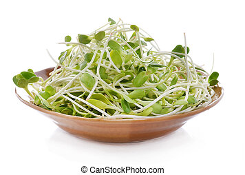 green young sunflower sprouts in the bowl isolated on white background