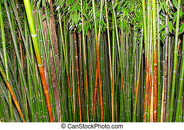 Green zen bamboo.