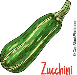 Green zucchini vegetable sketch for farming design -...