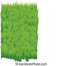 Green_grass - The green grass background. Grass field...