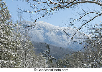 Greenbrier, Snow, Great Smoky Mtns National Park