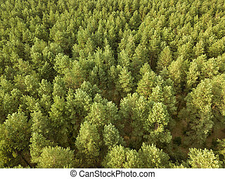 Greenery deciduous trees on a summer day. Aerial view of the drone as a natural layout