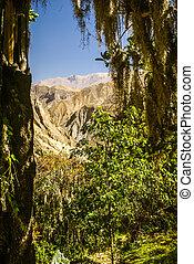 Greenery in Peru