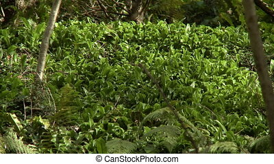 Thicket of green plants growing on the floor of a forest
