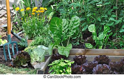 greenery vegetable garden with a spade