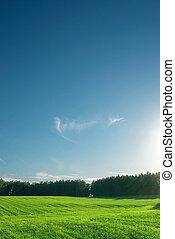 greenfield, und, wald, mit, perfekt, skyline