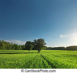 greenfield, wald, und, baum, mit, perfekt, skyline.