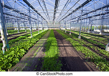 Greenhouse 1 - The interior of a large greenhouse.