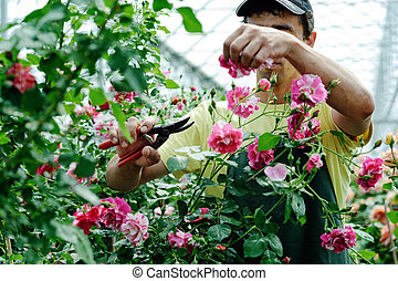 Greenhouse - An image of a young worker in a rosary