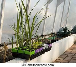 An Inside View Of A Small Greenhouse, In The Spring