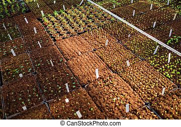 greenhouse., botanický, semenáci