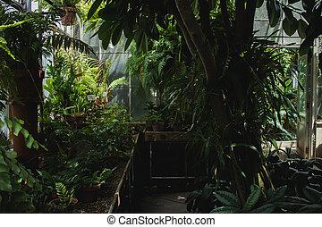 Greenhouse conservatory