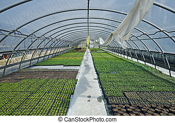 Greenhouse - Different kind of plants growing in a...