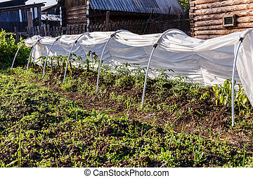 greenhouse for tomatoes and cucumbers
