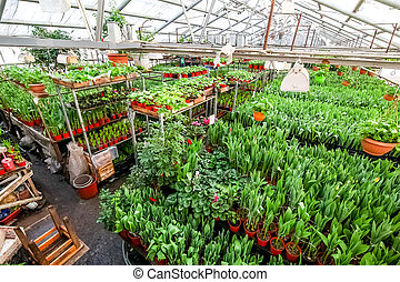 Greenhouse full of flowers.