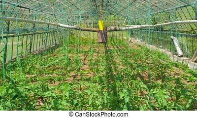 """Greenhouse garden, interior - """"Greenhouse garden, interior"""""""
