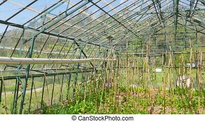"""""""Greenhouse garden, interior"""""""
