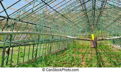 Greenhouse garden, interior