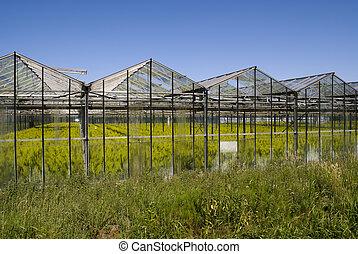 greenhouse, hos, mængder