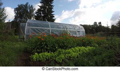 greenhouse in vegetable garden - Polyethylene greenhouse in...