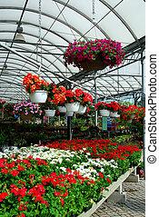 Greenhouse - Inside a greenhouse
