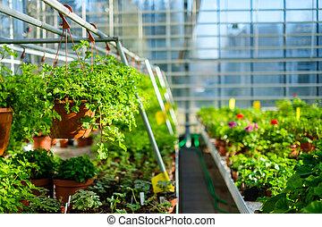 greenhouse., květiny, botanický, semenáci