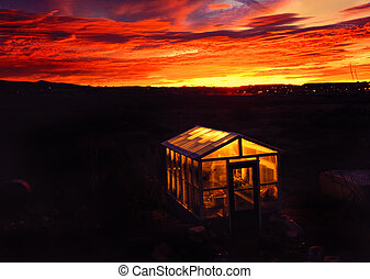Greenhouse Lights at Dawn