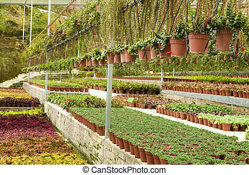Many plant selling in greenhouse.