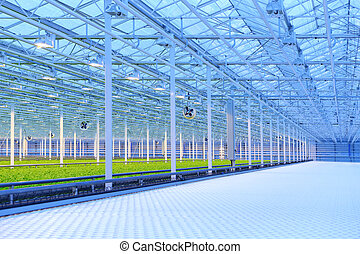 Greenhouse - Green salad growing in greenhouse, equipment...