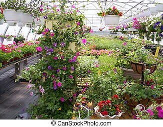 greenhouse plants and flowers Indian Garden farm Bridgewater Lunenburg County Nova Scotia