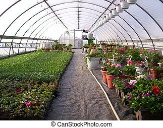 greenhouse plants flowers horticulture veggie Indian Garden Farm Hebbville Lunenburg County Nova Scotia