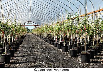 Greenhouse plants nursery, Oregon.