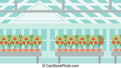 greenhouse., tomaten, achtergrond