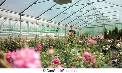Greenhouse with roses in small business gardening, a woman is working in the background