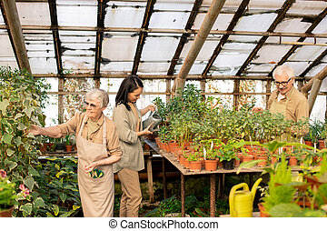 Greenhouse workers being responsible for daily care of plants